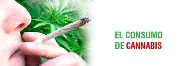 consumo_de_cannabis-3325785