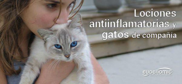 lociones_antiinflamatorias_y_gatos-4176415