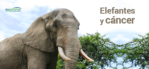 elefantes_y_cc3a1ncer-7232396