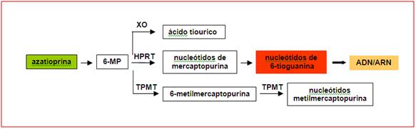 azatioprina-1624765
