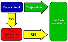 isoniazida_1-6330159