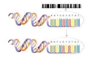 single_nucleotide_polymorphism_substitution_mutation_diagram_-_cytosine_to_thymine-4287285