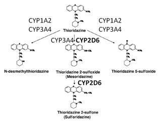 tioridazina-4354788