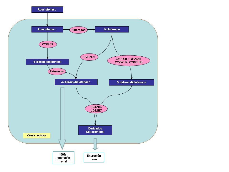 Metabolismo del aceclofenaco
