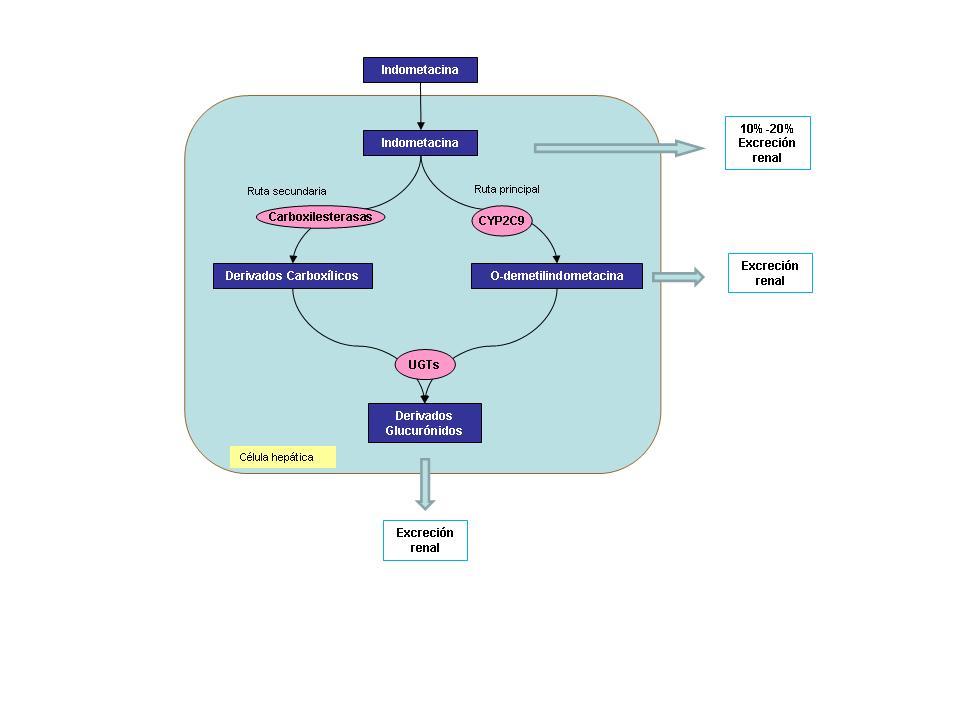 Metabolismo indometacina