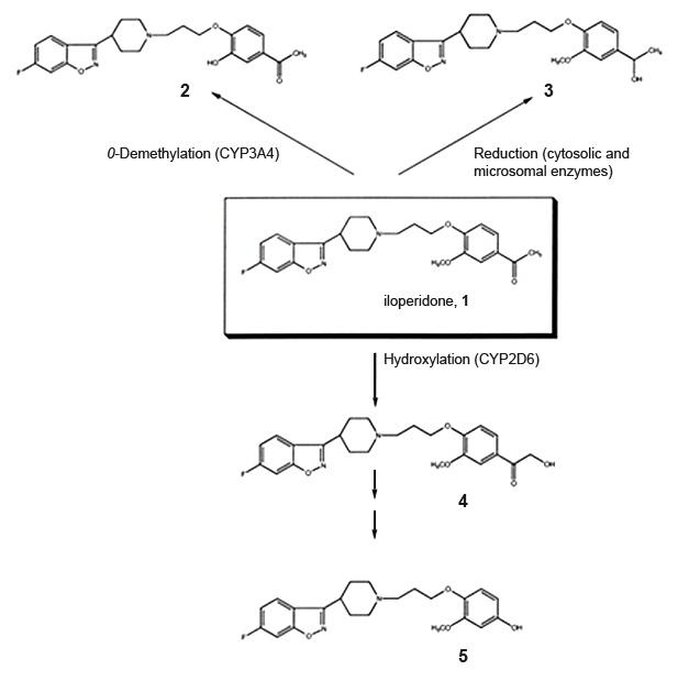 Metabolismo Iloperidona