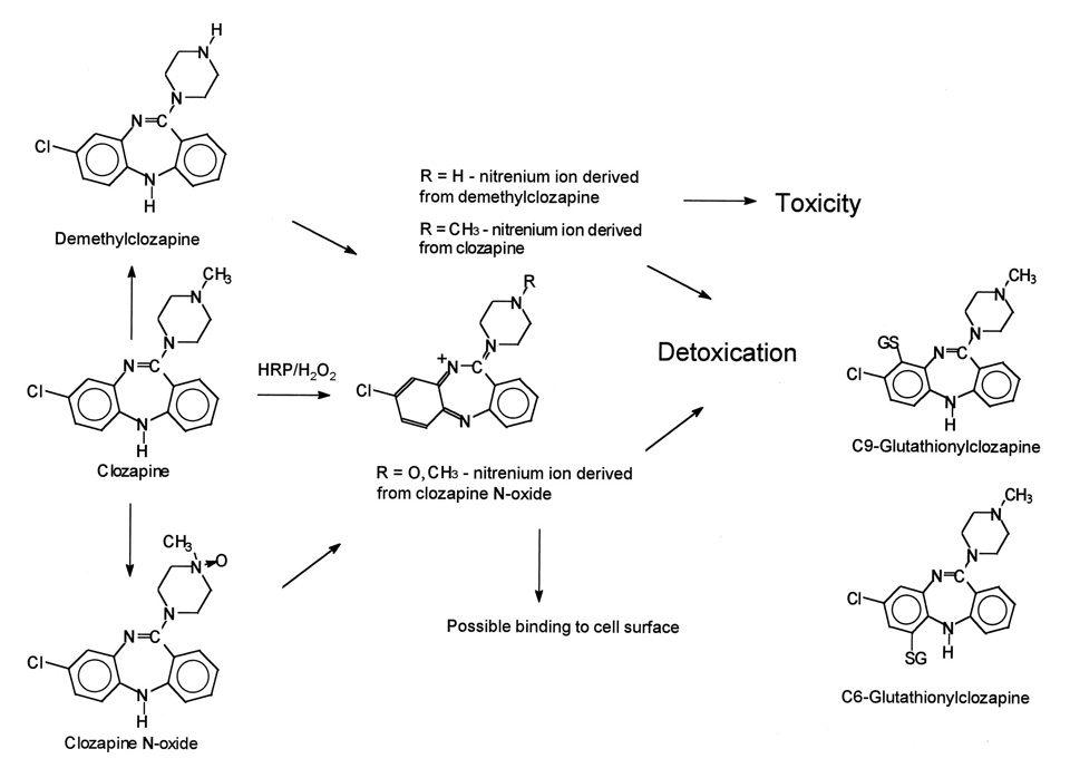 metabolismo_clozapina-4223611